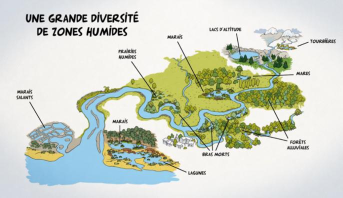 Infographie présentant la diversité des zones humides
