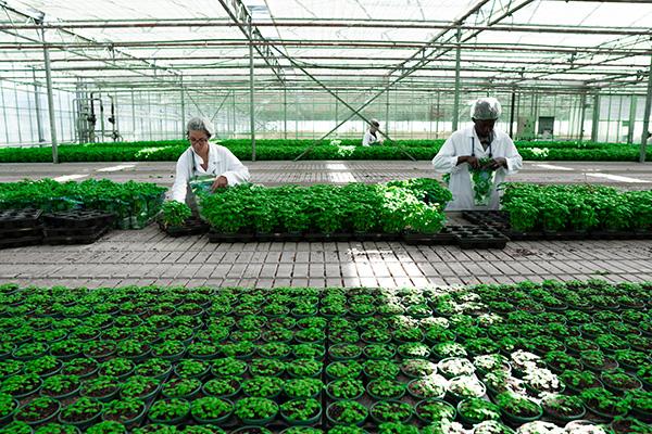 Le végétal spécialisé rassemble toutes les productions végétales à haute valeur ajoutée: plantes d'ornement, arbres et arbustes, fruits, légumes, vins, semences, plantes médicinales et aromatiques...
